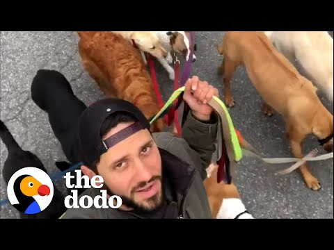 Guy Becomes Dog Walker Because He Didn't Want To Be Away From His Own Dog | The Dodo