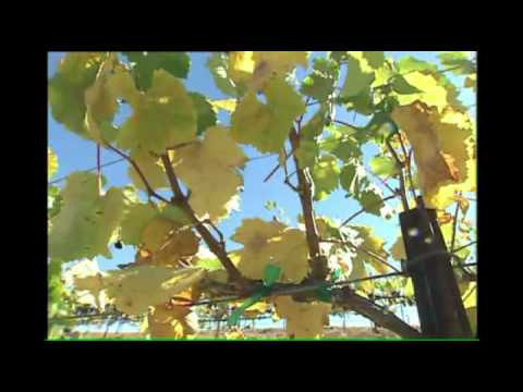 WINE VINEYARD TASTING ROOM VIDEO MARKETING MEDFORD OREGON