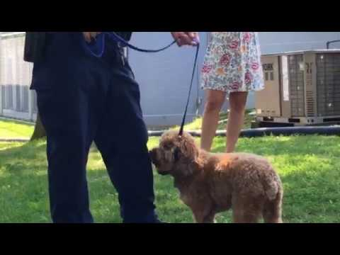 New Pa  law changes requirements on tethering your dog