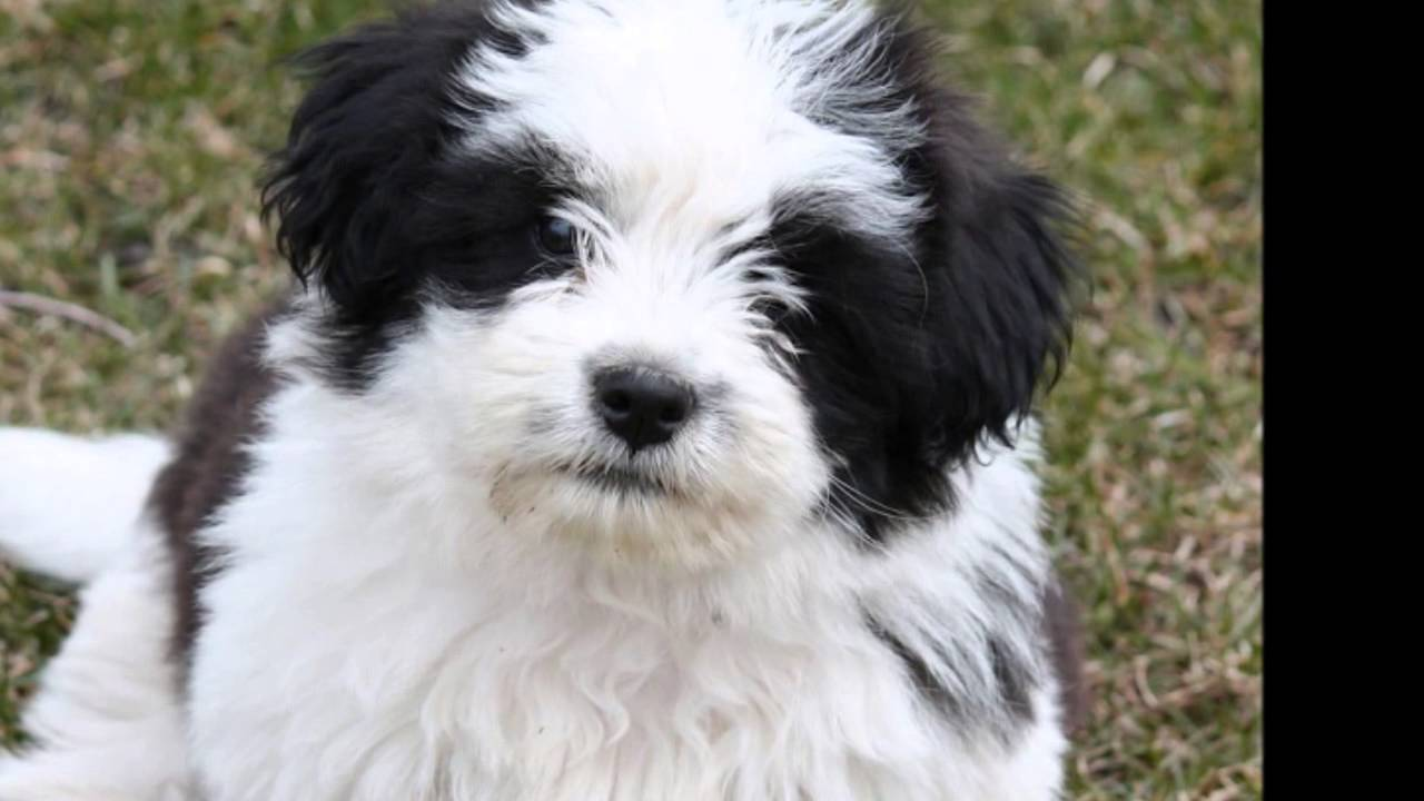 10 Best Small Dog Breeds For Indoor Pets Youtube