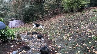 Our dog wins a Chase Game!
