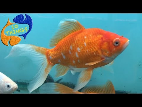 Get These Fish Out Of The Hobby! Top 10 Fish That Shouldn't Be In Aquariums