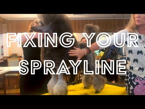 How to Set the Spray-Line on your Poodle Properly