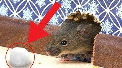 7 Tested & Proven Ways To Get Rid of Rats Permanently / How To Kill Rat / Rat Trap