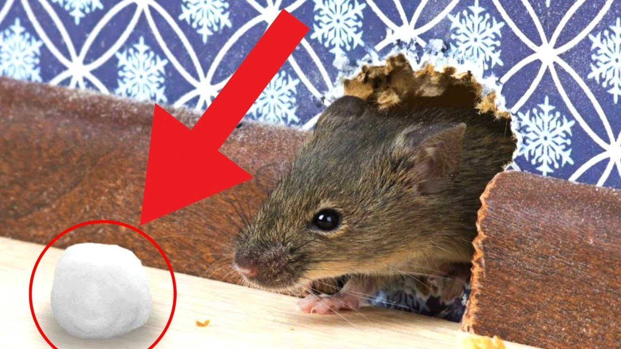7 tested proven ways to get rid of rats permanently how to kill rat rat trap youtube. Black Bedroom Furniture Sets. Home Design Ideas