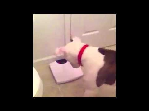 Dog Barks at Weight on a Scale