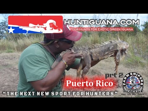 Hunt Iguana Puerto Rico Part 2