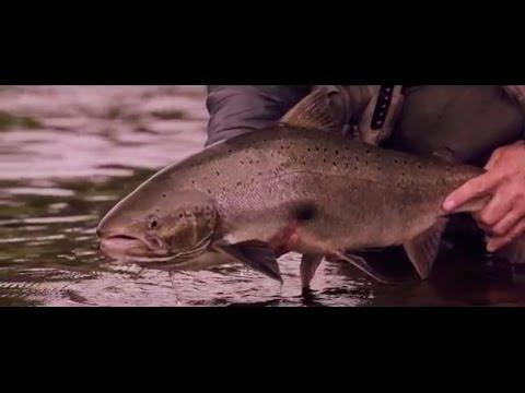 Ausgezeichnetes Video über Angeln