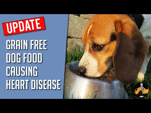 The Dog Food Causing Heart Disease EXPOSED (New Grain Free Update) - Dog Health Vet Advice