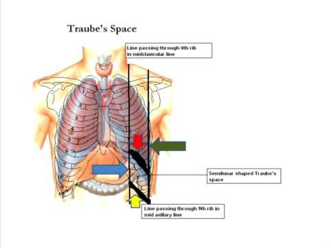 Traube's space
