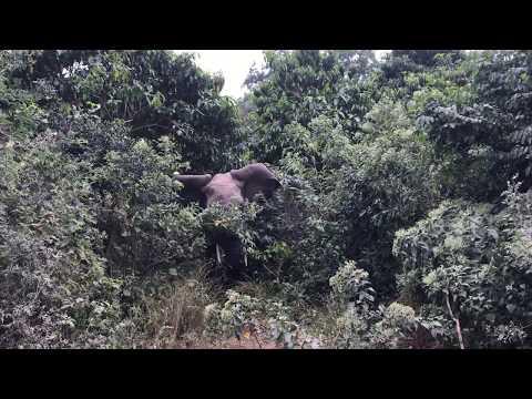 Lake Manyara National Park Day 1 elephant