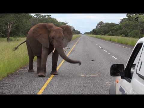 Route A33 Ngome - Kasane, Botswana