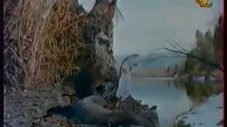 Клуб путешественников ОРТ, 1997 Славное море - священный Байкал