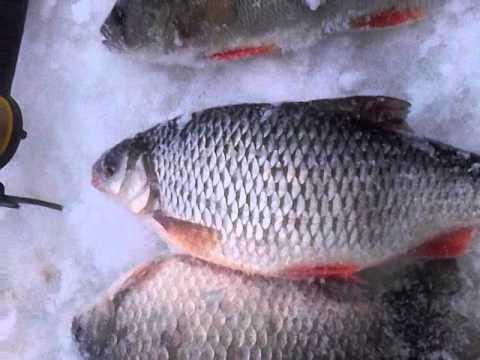 Зимняя рыбалка в Марий Эл с.Ронга