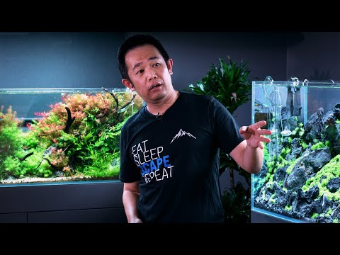 MASTERCLASS - HOW TO BUILD THE PERFECT AQUASCAPE FOR CONTESTS - BY WORLD CHAMPION JOSH SIM