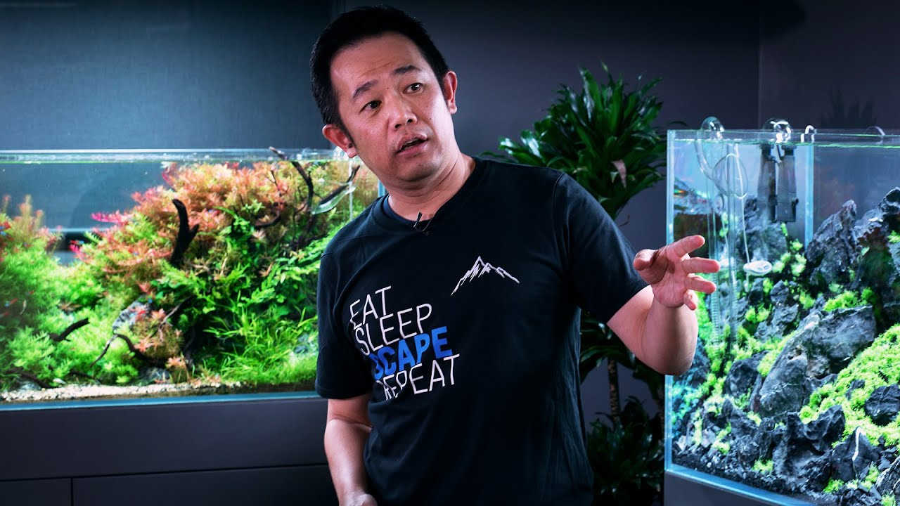 Download MASTERCLASS - HOW TO BUILD THE PERFECT AQUASCAPE FOR CONTESTS - BY WORLD CHAMPION JOSH SIM