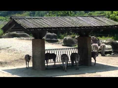 Taipei Zoo, HD Experience