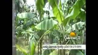 Arka Banana Special Demo by Ramadugu Praveen(On farm Trail on Effect of Arka Banana Special on growth and yield of Banana in Srikakulam District by Krishi Vigyan Kendra, Amadalavalsa, Srikakulam District ..., 2014-10-27T04:58:51.000Z)