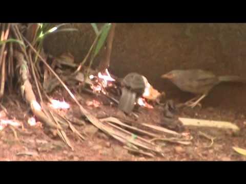 Kerala Birds Sharing Food