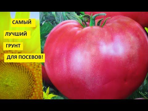 ГОТОВЛЮ ГРУНТ ДЛЯ РАССАДЫ ТОМАТОВ. Ольга Чернова.