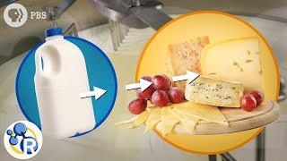 How Milk Becomes Cheese