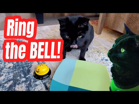 Cat Tricks: Ring the Bell attempt #2