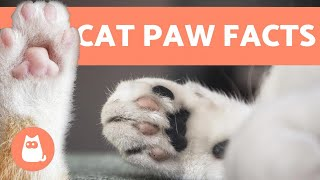 10 FUN FACTS About CAT PAWS 🐾🐱 Find Out More!