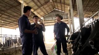 Hướng dẫn nuôi Bò sữa