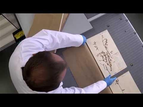 Interviews Luc Willemse en Niels Raes over project Herbarium Digistraat