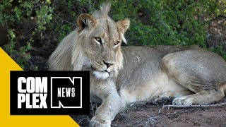 Suspected Rhino Poachers Who Snuck Onto South African Reserve Killed by Lions