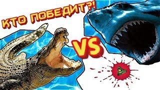 КТО ПОБЕДИТ: Гребнистый крокодил или белая акула?