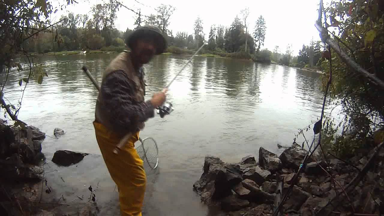Salmon fishing on the snohomish river wa snoho slippy for Salmon fishing washington rivers