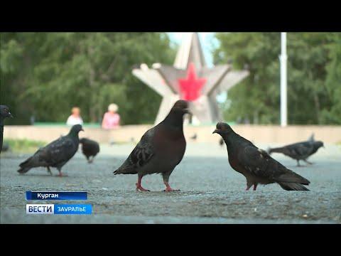 Парк Победы в Кургане реконструируют