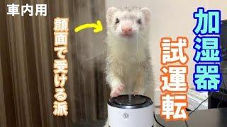 車用の加湿器買ったので家で試運転したらフクが興味津々でした。 加湿器...