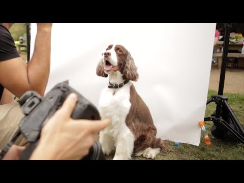 """""""LICK"""" Dog Photoshoot with Ty Foster"""