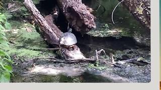 Wekiwa Springs - Florida State Parks Video