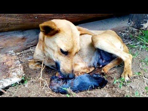 Indian Street Dog Puppies Birth So Sweet