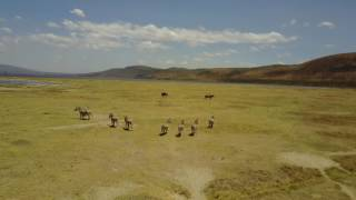 Safari in Kenya with DJI Mavic Pro