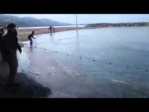 how to catch mullet fish night on beach with net