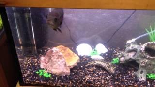 my aquarium aqua one ar 850 part 4