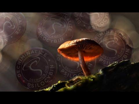 Inside the Campaign to Legalize Magic Mushrooms in California