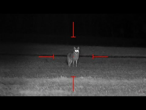 Coyote Hunting at Night - Dirt Naps 6