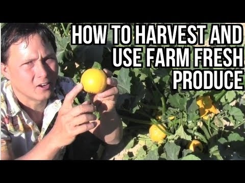 How to Harvest and Use Fruits & Vegetables from the Farm