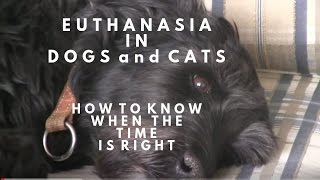 Euthanasia in Dogs and Cats: How To Know When
