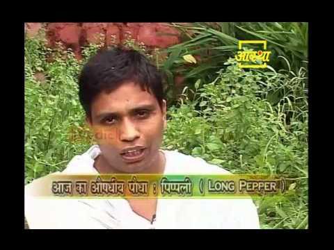 Ayurvedic use Long Pepper (Pipli)