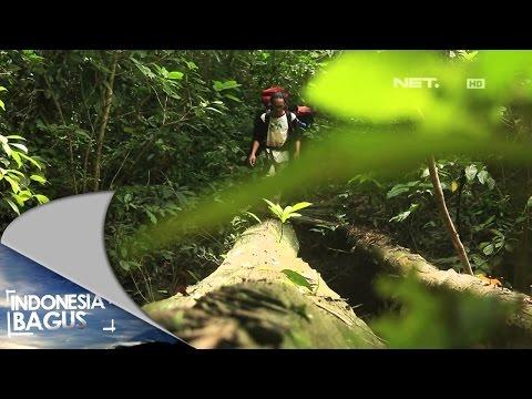 Indonesia Bagus - Kisah Kebanggaan dari Kutai Timur, Kalimantan Timur