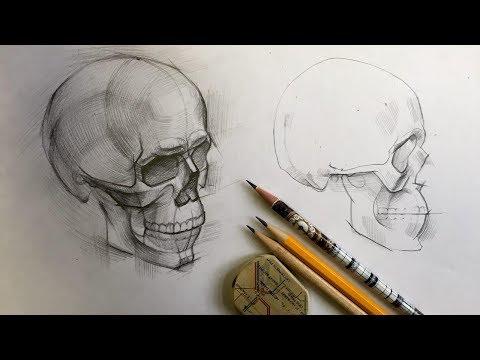 Череп от А до Я. Дарья Остапенко о том, как правильно рисовать череп человека