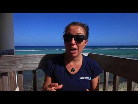 Underwater Symbiosis Questions From Georgetown Primary School
