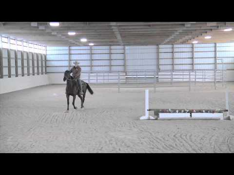 Training an Off the Track Thoroughbred Part 4 - Advantage Horsemanship TV