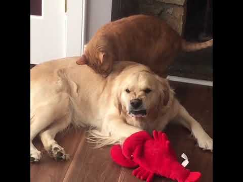 Damian Rhodes - Dog Makes Hilarious Face When Licked by Cat!